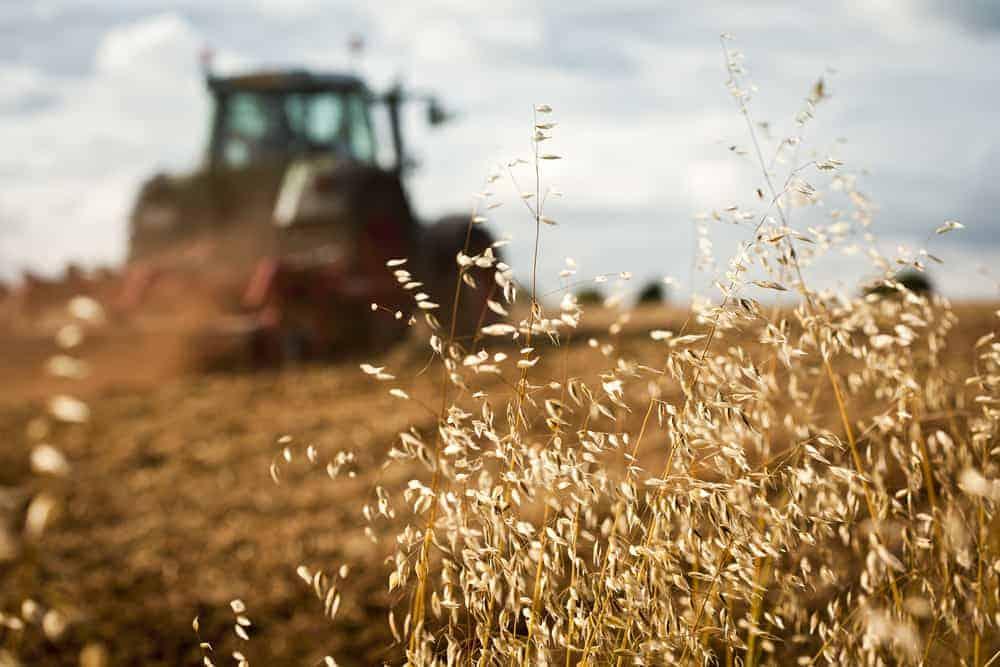 prophetstown-state-park-battleground-cornfield